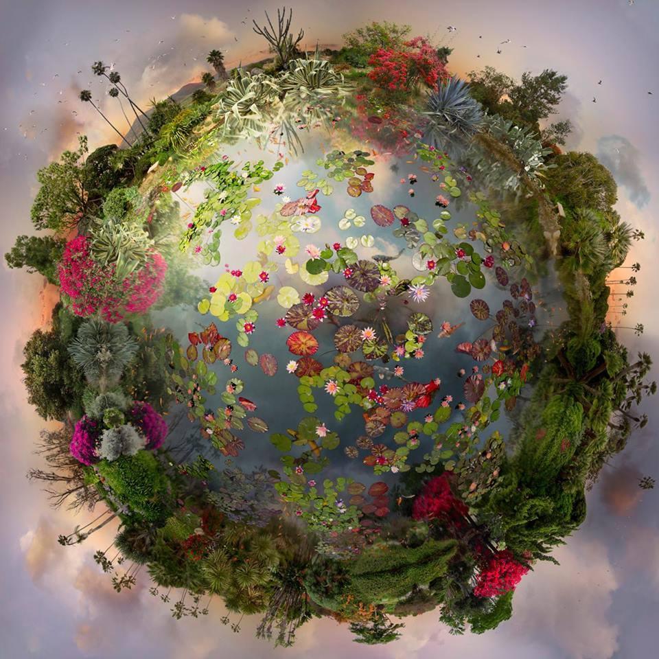 planète fleurie.jpg