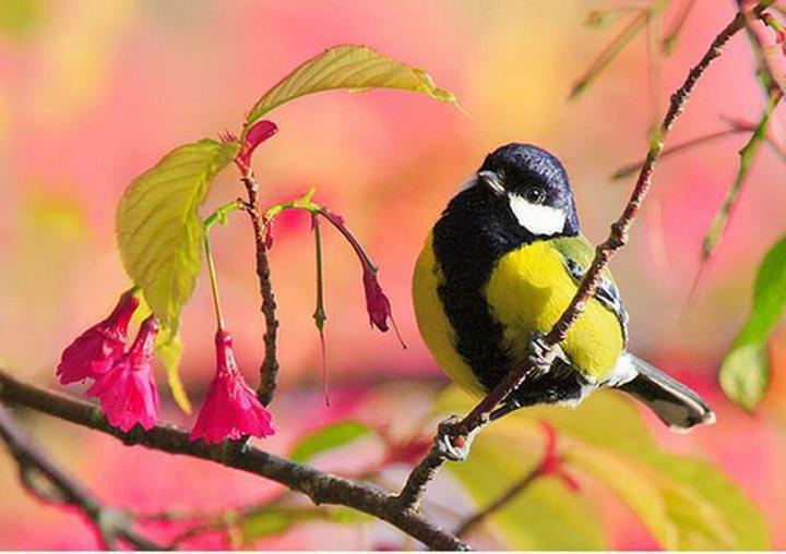 oiseau et printemps.jpg