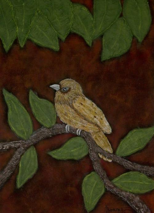 oiseau texture.jpg