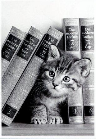 chaton entre les livres.jpg