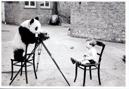 panda photographe.jpg
