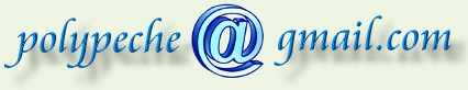Poly gmail.jpg