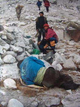 même les sherpas sont malades