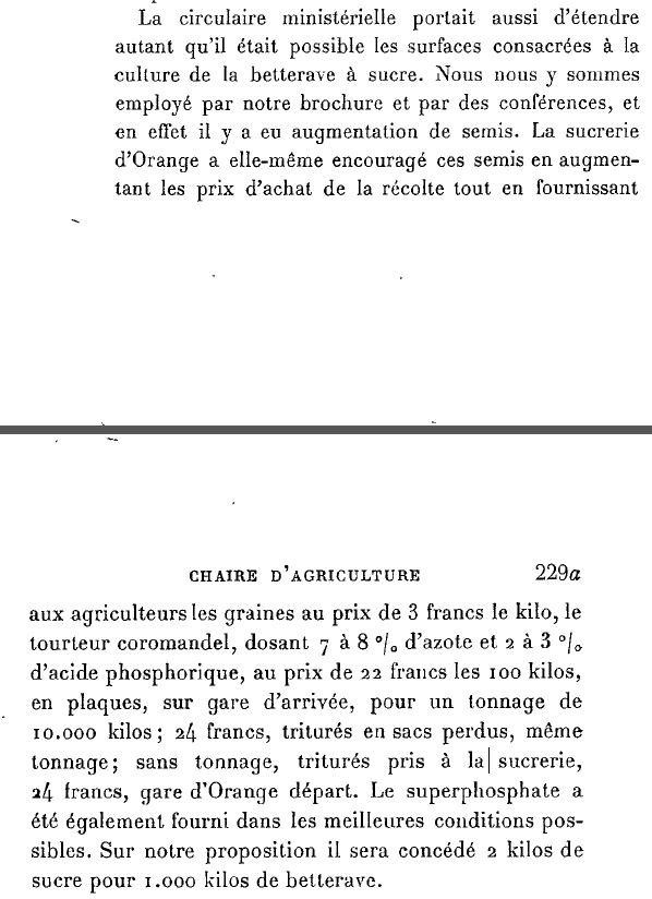 1917betteraves.JPG