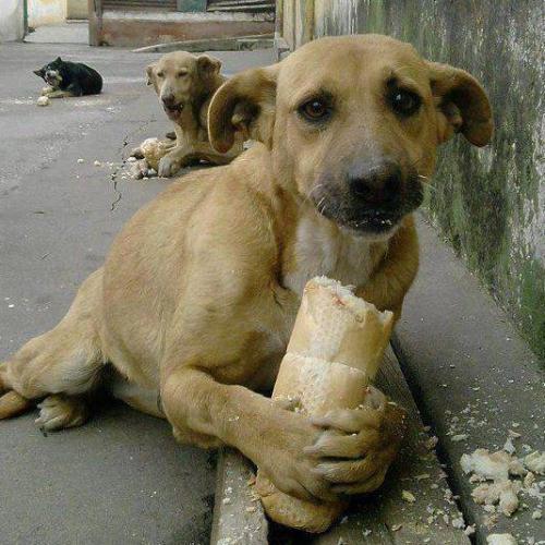 street-dogs.jpg