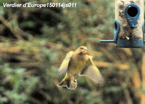 Photographier les oiseaux.JPG