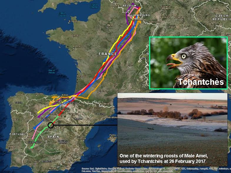 Milan royal migration.jpg