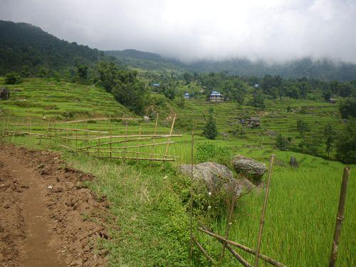 Ambiance rizières et jungle depuis Tumlingtar...