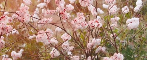 django-unchained-bloody-cotton.jpg