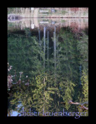 SUISSE Lac des Joncs 20.11.09 052.JPG