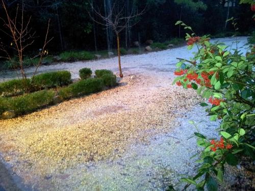 Excès pluie cotoneaster 19 janv 14.jpg