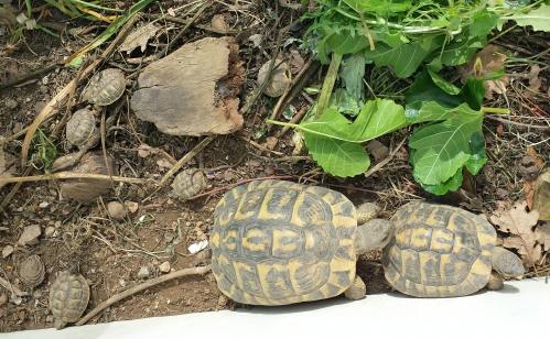 Famille tortue 22 avr 15.jpg
