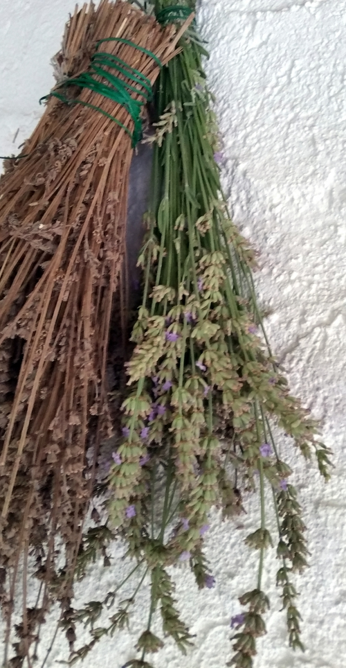 Bouquet de lavande séchée 7 août 15.jpg