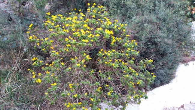 Euroeps en fleurs 29 oct 15.jpg