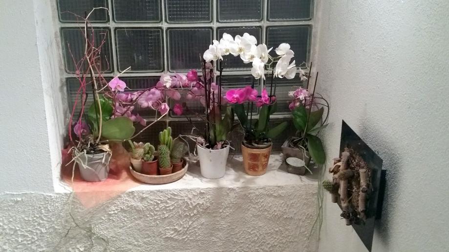 Orchidées 14 janv 16.jpg