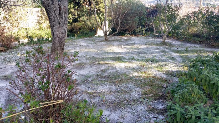 Cendre pelouse et composts 11 fev 16.jpg