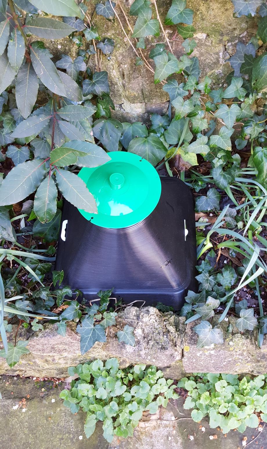 Piège vert installé 5 mars 16.jpg