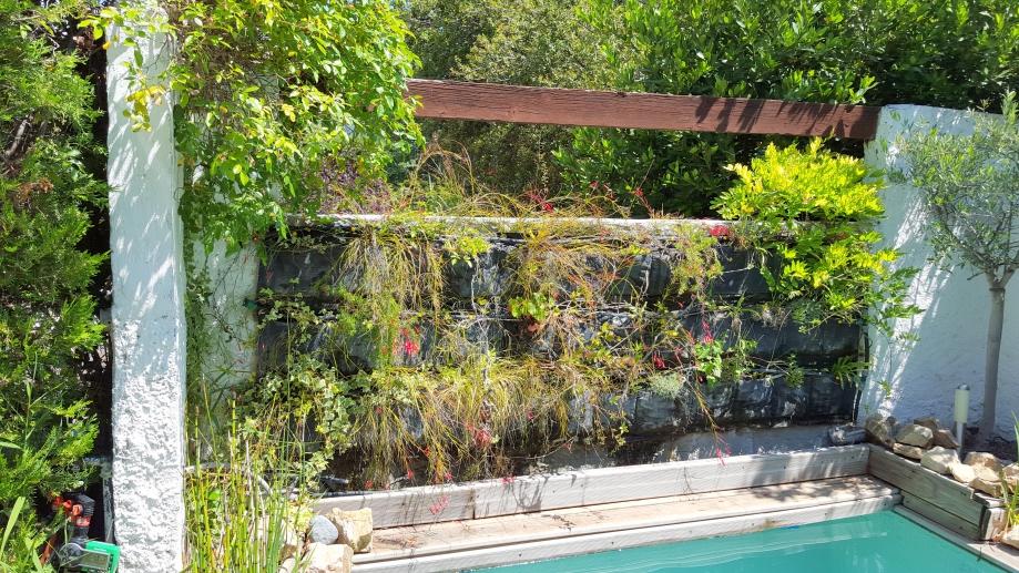 mur végétalisé 6 juin 16.jpg