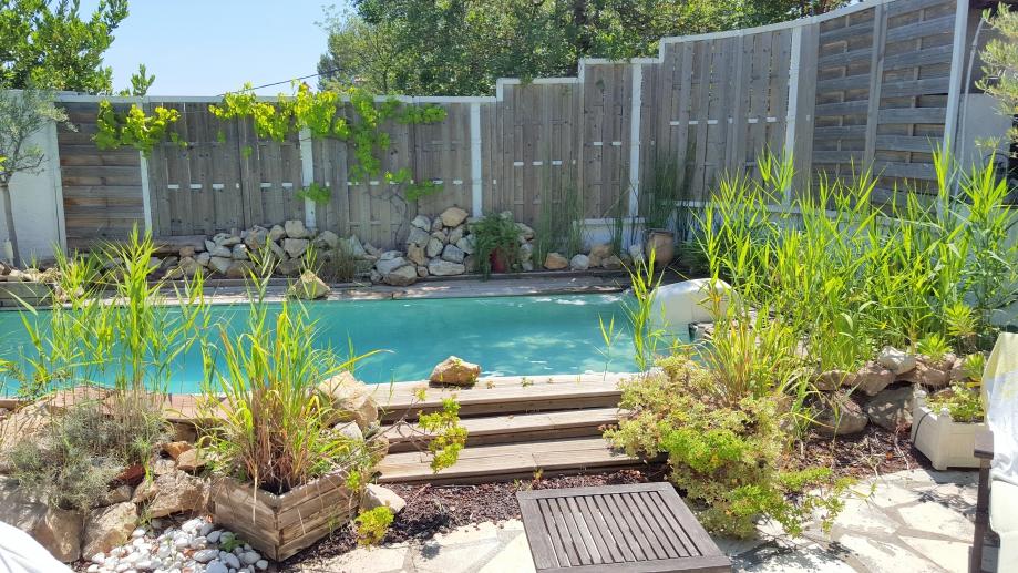 Zone lagunage piscine en plein développement 6 juin 16.jpg