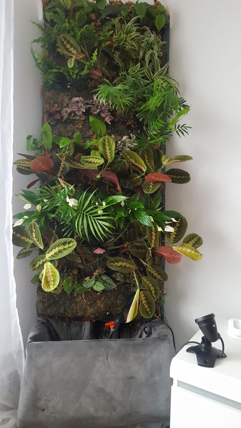 liste plants selon photo 4 mars 17.jpg