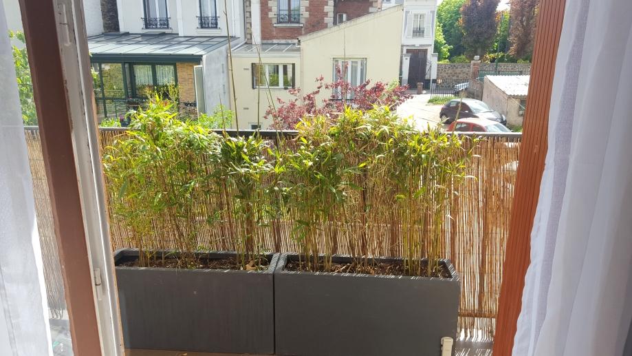 Jardinière bambous 23 avr 17.jpg