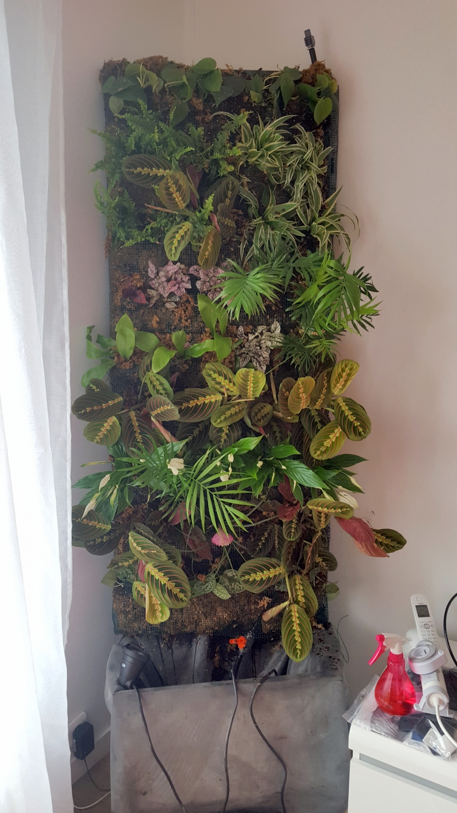 Mur végétal installé !.jpg