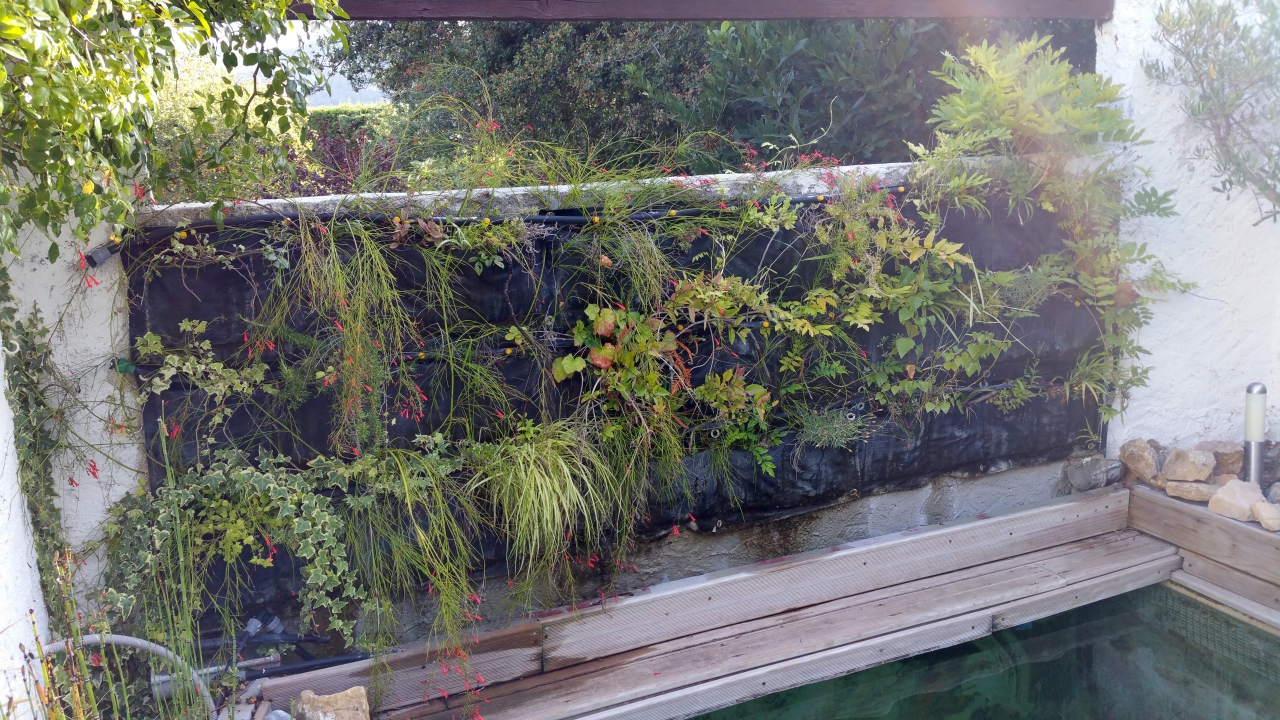 Un mur v g talis ext rieur toujours color et bien fourni for Creer son mur vegetal
