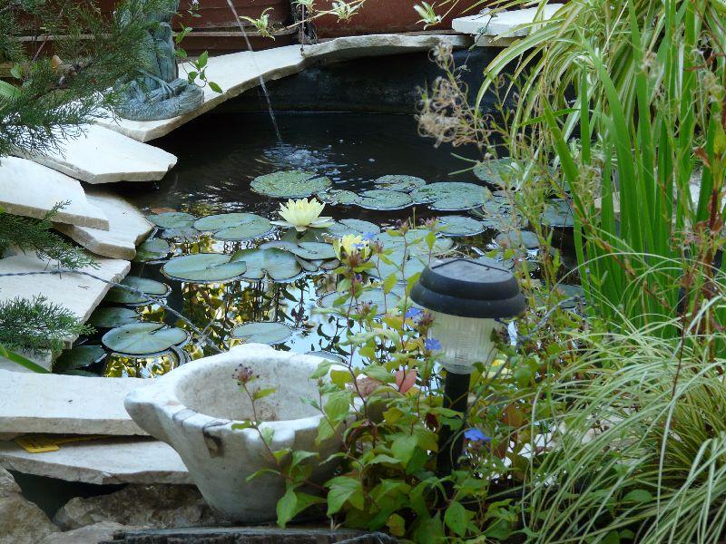 Petit bassin en t comment cr er son jardin for Piscine preformee