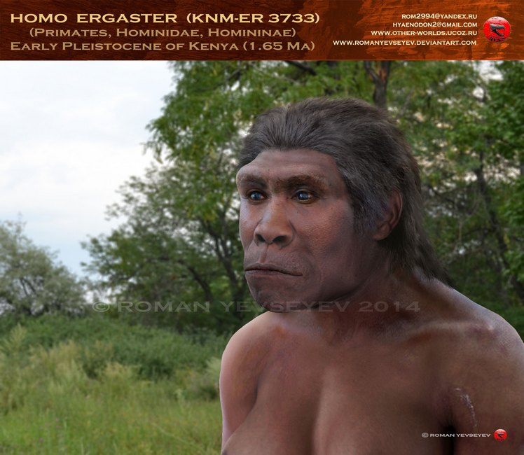 homo_ergaster__knm_er_3733__by_romanyevseyev-d8c94iy.jpg
