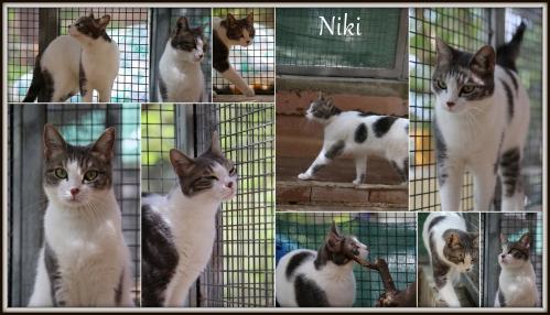 Niki-001.jpg