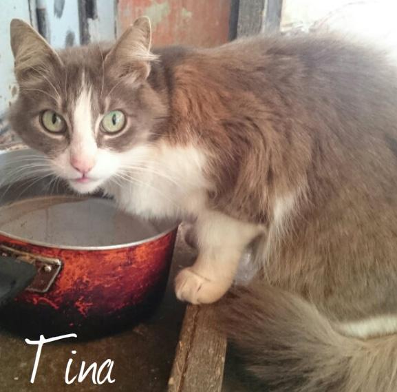Tina pa jjpg.jpg