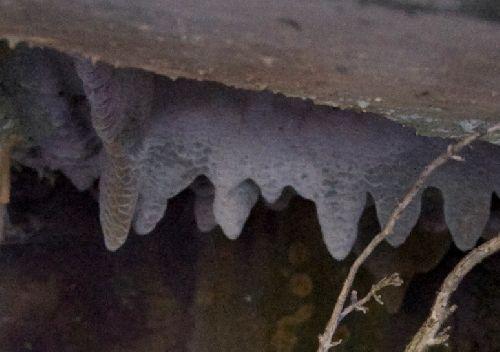 Les stalactites (Ph. Laurent Crassous)