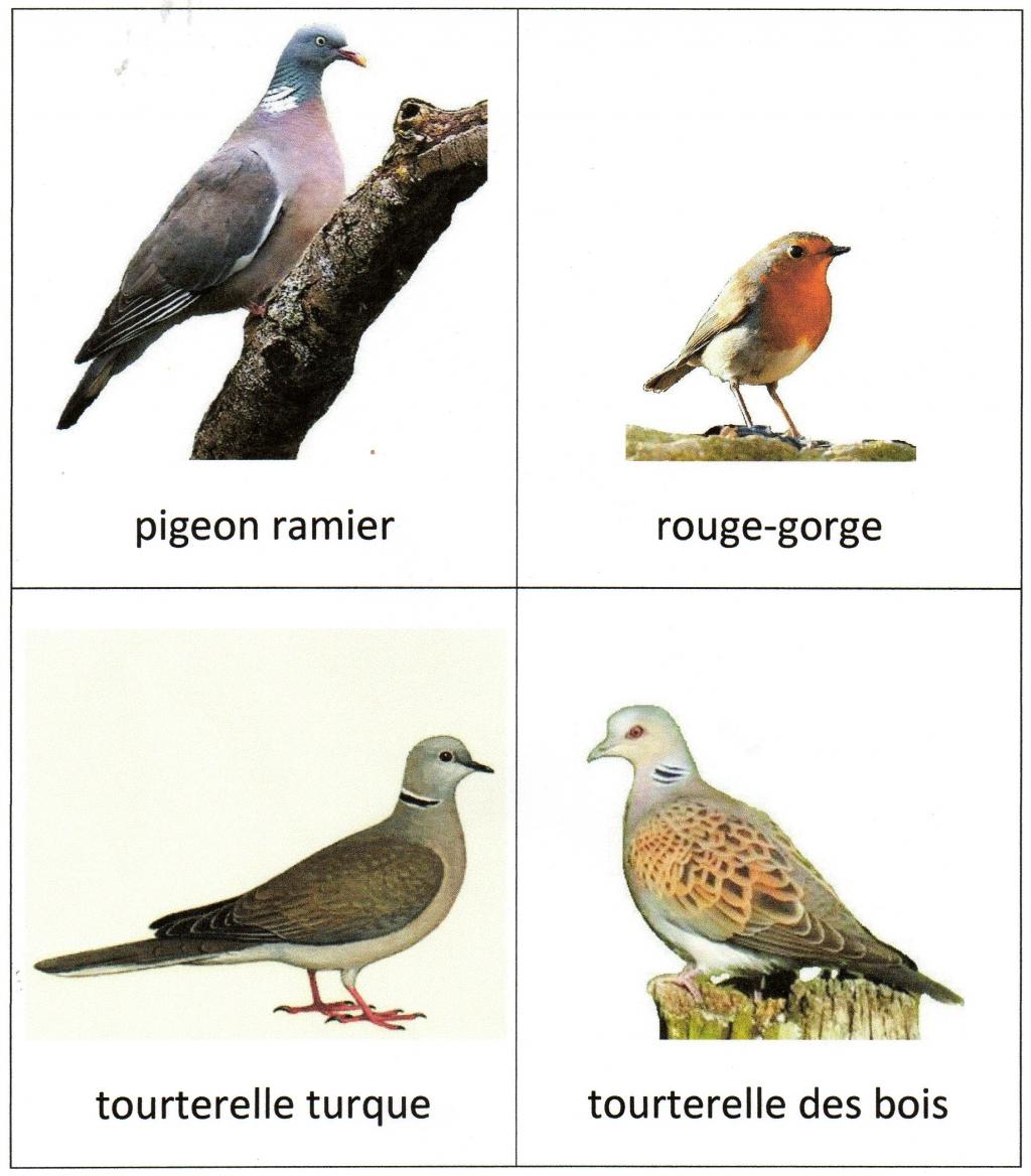 nom d oiseaux par ordre alphabetique
