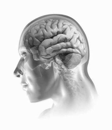 image stylisée d'un cerveau humain human brain facebook ingénierie sociale psychologie manipulation mentale