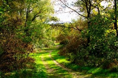 paysage-plus-belles-photos-campagne-francaise_341524.jpg