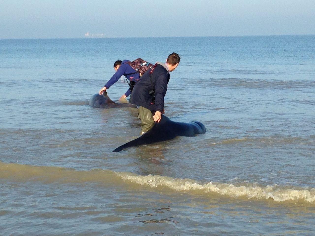 baleine 3jpg.jpg