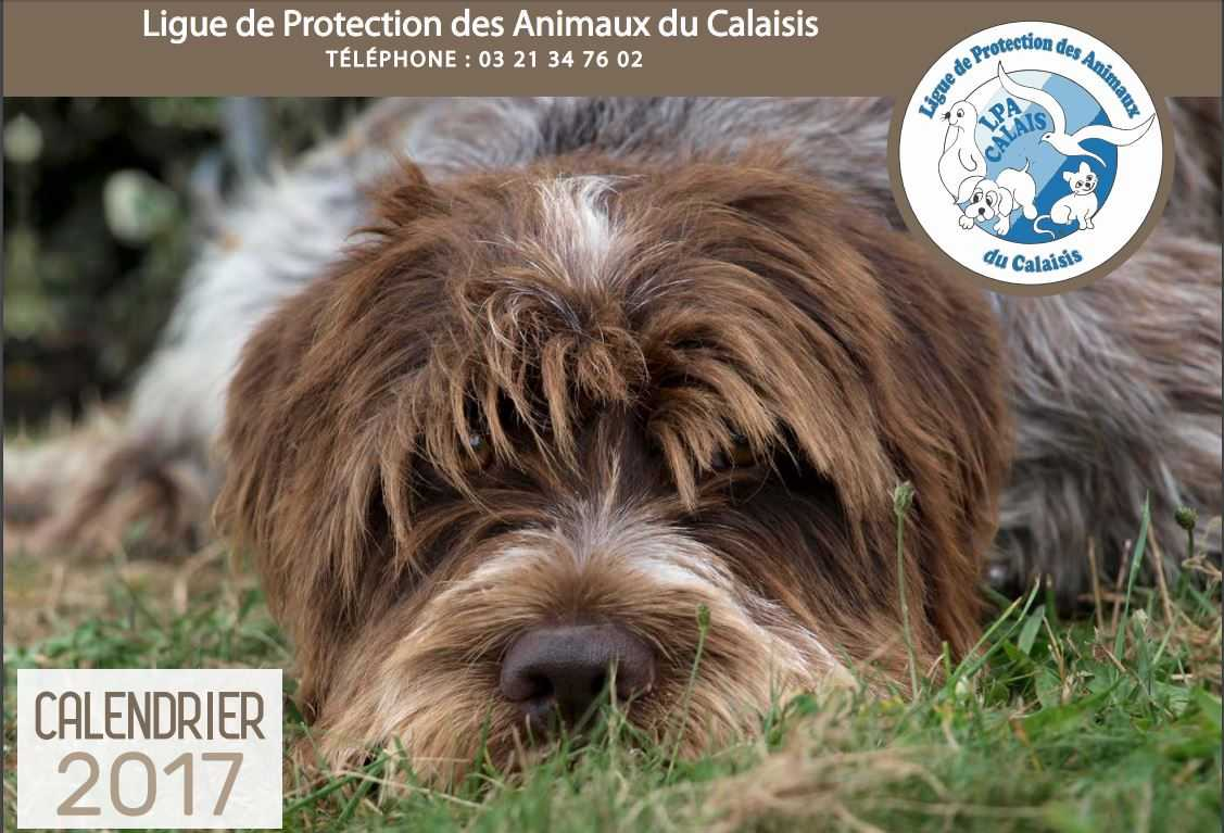calendrier chien 2017 comp.JPG