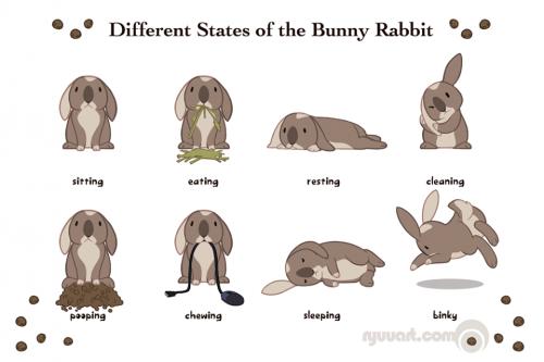 positions des lapins.png