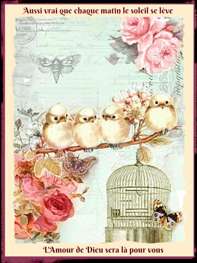soleil-amour-oiseaux.png