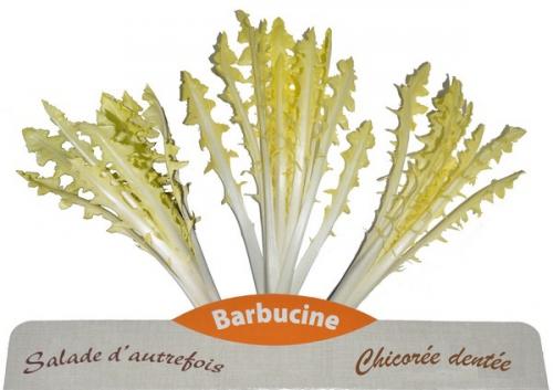 barbucine.jpg