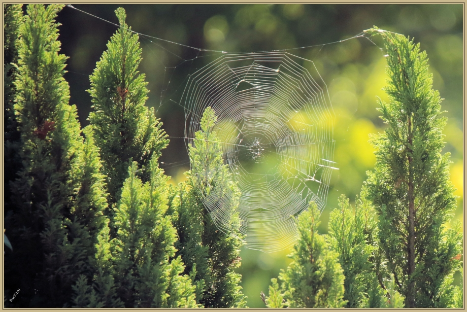 UE8A9093 araignée.jpg