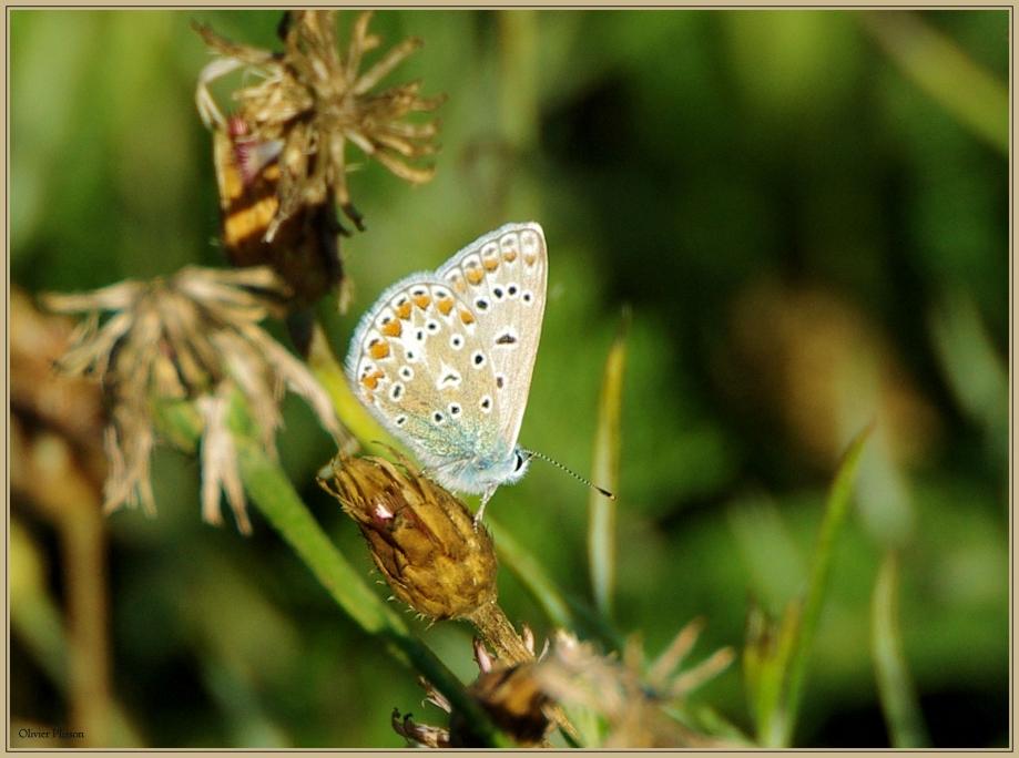 PTX_3547 - Copie (3) papillon.jpg