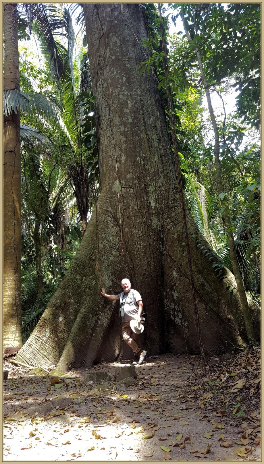 20170328_113546 arbre monumental.jpg