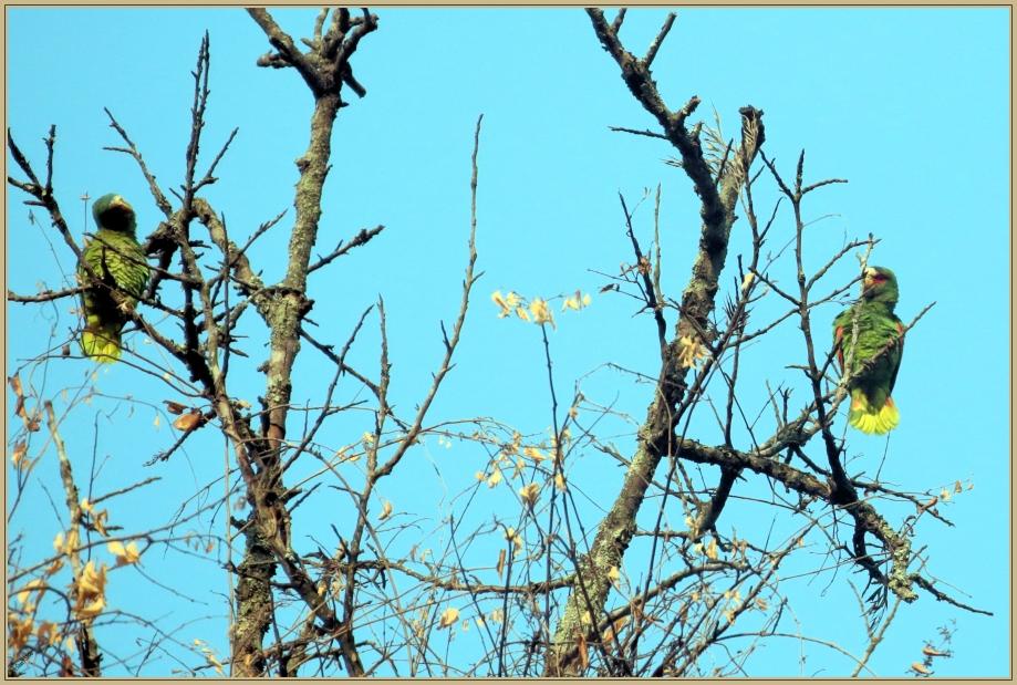 UE8A1392 AMAZONE A FRONT BLANC.jpg