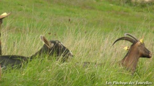 Biche et Lola dans la savane !