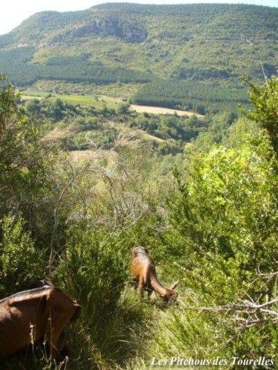 Une partie de garrigue perdue dans la montagne