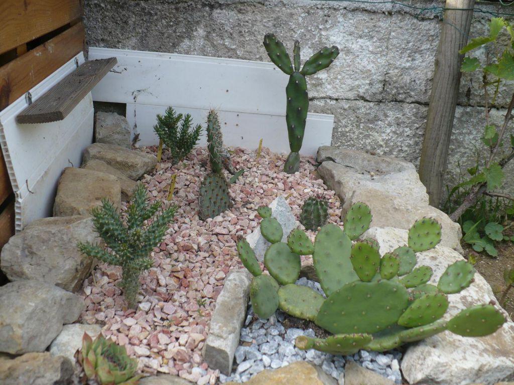 cactus exterieur sous abri cactusdu57. Black Bedroom Furniture Sets. Home Design Ideas