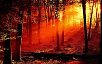 Le sentier des justes en Christ