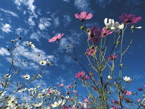 Fleurs-des-champs-2.jpg