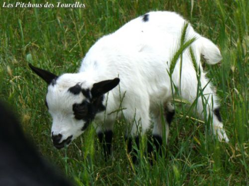 Eliot 2 mois dans l'herbe